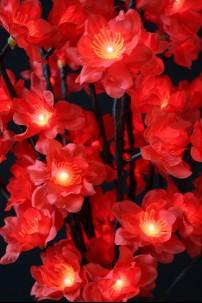 96 Light Red Plum Nouveau [184113]