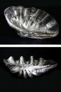 "Giant Clam Shell 31""W, 9""H [201279]"