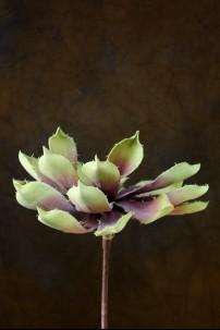 Purple-Green Foam Flower 9 Inch [FF2025]