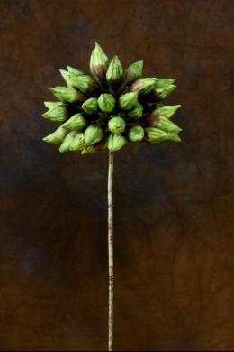 Brown-Green Foam Flower 18 Inch [FF2100]