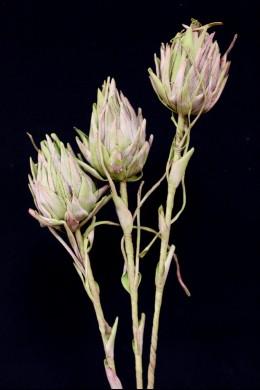"""Green Foam Flower 41"""" [FF2211]"""