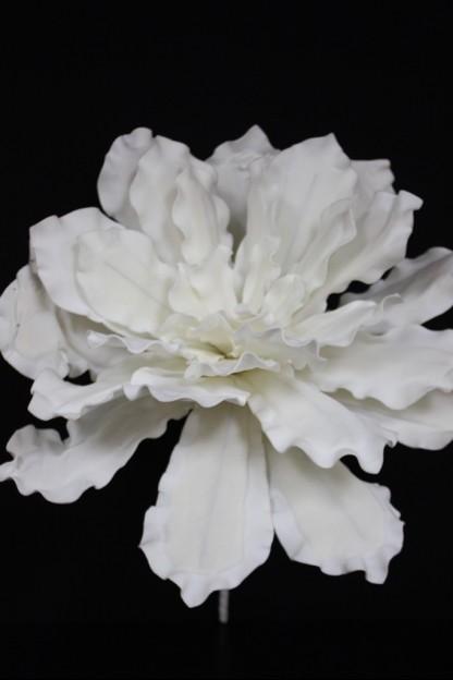 White foam flower 27 ff2252 mightylinksfo