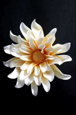 White and Yellow Wall Flower [FF2295]