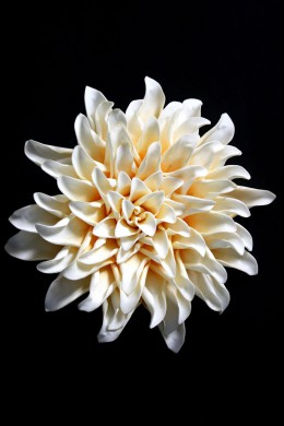 White and Yellow Wall Flower [FF2297]