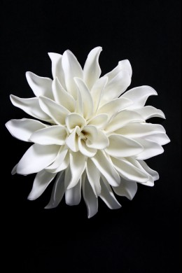 "11""D WHITE WALL BLOOM [FF2306]"