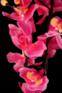 Pink Orchid 16 Light [PKORQ16]