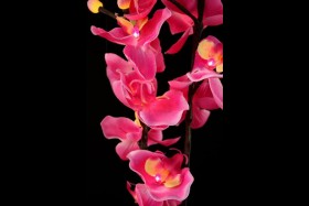 PINK ORCHID 16 LIGHT