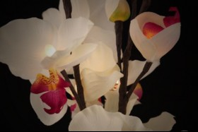 WHITE ORCHID 17 LIGHT