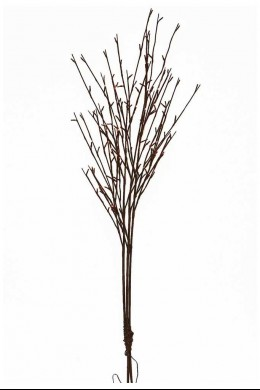 """120 Light Willow Branch with Warm White LED'S, 50""""H [184138]"""