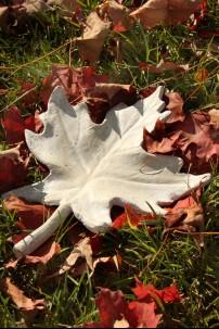 Maple Leaf - SAN [367161]