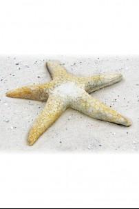 Starfish Giant 30 [367164]