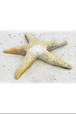 Starfish Giant 30 [367164]