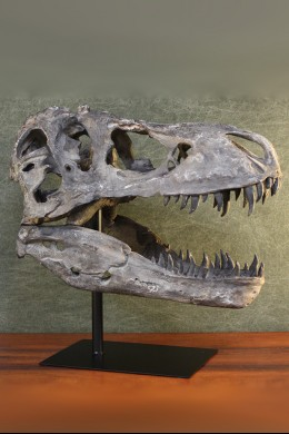 Dinosaur Head with Metal Stand [376006]