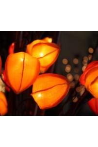 Chinese Lantern Orange 30 Light [CHLTOR30]