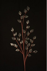 Crystal Spray Clear Leaf 30 Count  [CRYCLF30]