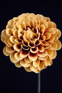 """Marigold Foam Flower 22"""" [FF2270]"""