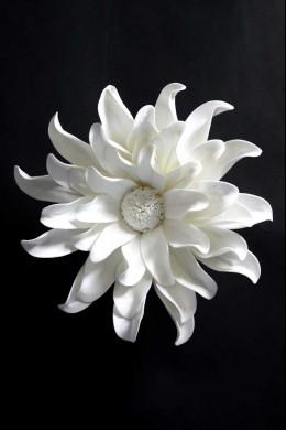 White Wall Flower [FF2294]