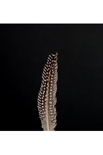 Guinea Hen Feather [FTRGNH]