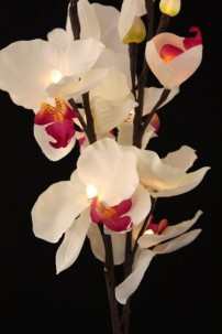 White Orchid 16 Light [WTORQ16]